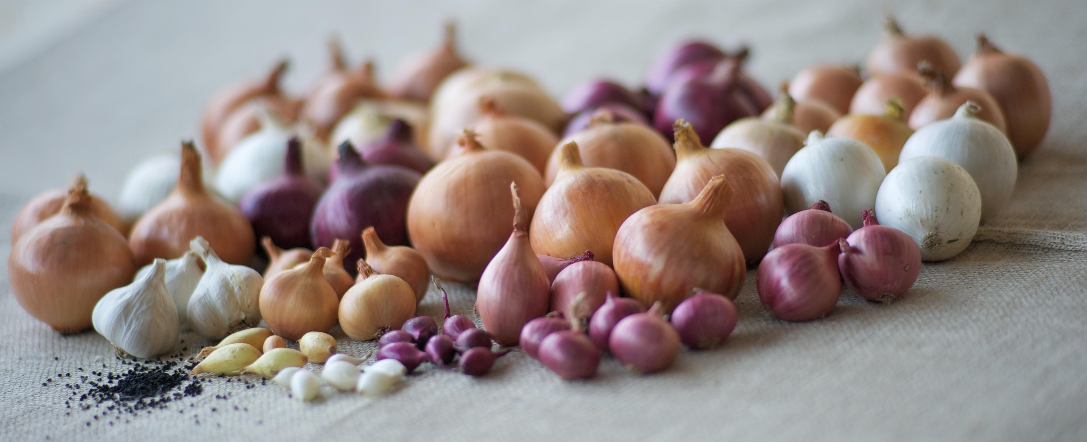 Seed Quality De Groot En Slot Bv